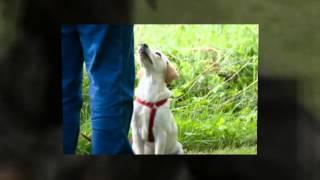Dog Training School For Instructors San Diego Ca