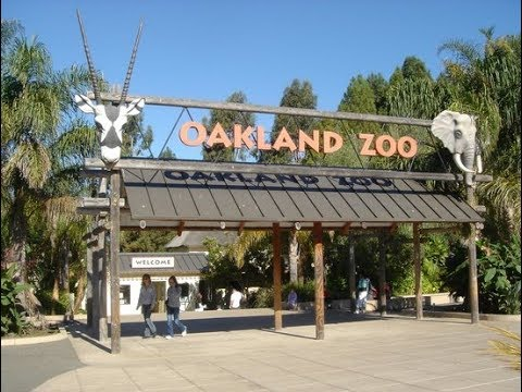 It's My Birthday! Visiting the Oakland Zoo