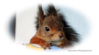 Задачки для белочек № 3 Exercise for squirrels. №3