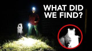 Nighttime Predator Patrol with Guard Dog  | Livestock Guardian Dog at Work
