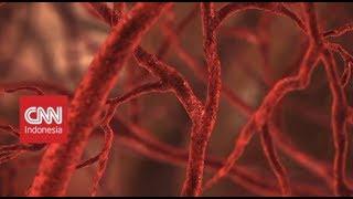 Mengenal Penyakit Kanker Darah