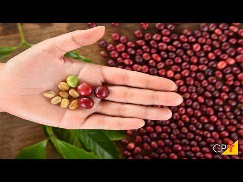 Clique e veja o vídeo Curso Passo a Passo para se Obter Café de Qualidade - Pré-Processamento do Café - Cursos CPT