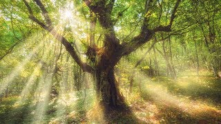 Sleep Music, Relaxing Music, 'Mystical Forest' by Tim Janis
