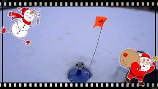 Зимняя рыбалка Рыбалка на Истринском Вдхр И рыба есть и ЛОСИ по льду бегают