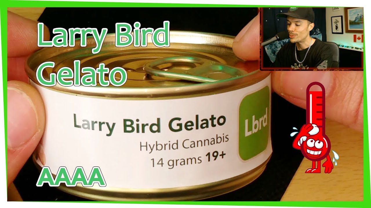 Potent Cannabis • Larry Bird Gelato • HIGH THC Strain | STONEReview 54