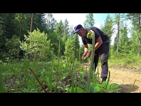 Про первые лесные