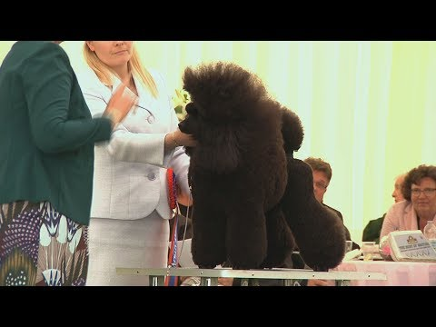 Southern Counties Dog Show 2017 - Best in Show