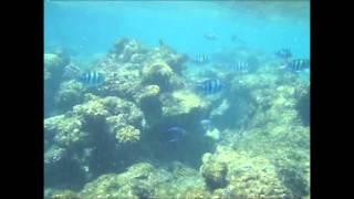 První pohled pod hladinu Rudého moře