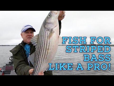 CRAZY DIVING BIRD ACTION! Let's Fish #9 SouthWEST Lake Murray, South Carolina Striped Bass Fishing
