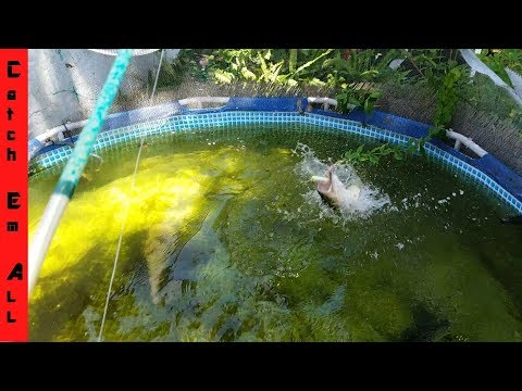 FISHING IN POOL pond CATCHING Giant PET BASS!