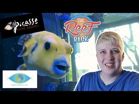 TOURING LOCAL FISH STORES | Come Meet Me At Aquashella!