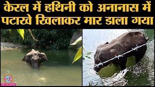 Kerala में Pregnant Elephant को पटाखों से भरा फल खिलाने वाले लोग कौन हैं?