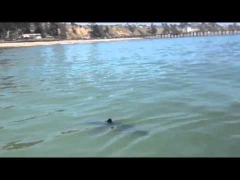 White shark cement ship June 25 2015