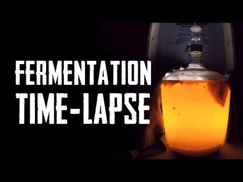 Fermentation Timelapse