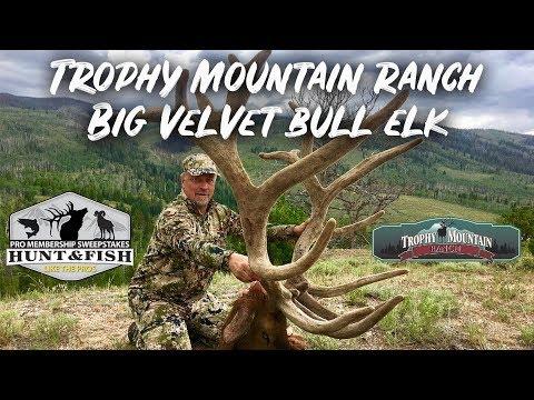Bow Hunting Big Velvet Bull Elk At Trophy Mountain Ranch
