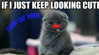 FUNNY CUTE CAT VIDEO 😂😂😂😂! 🐈🐈🐈🐈🐈🐈🐈🐈! FUNNY VIDEOS! 😂😂😂😂
