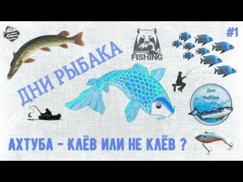 Ахтуба - Клёв или не клёв?   Русская рыбалка 4   РР4   Дни Рыбака  #1