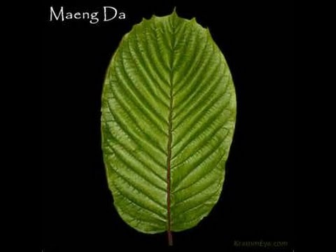 Plantation, Red, and White MAENG DA Reviews- Best Kratom Buy