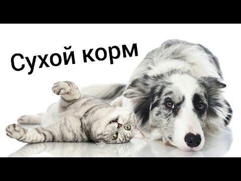 СУХОЙ КОРМ //Вред или польза