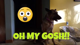 Epic Pup Battle Caught on Camera!