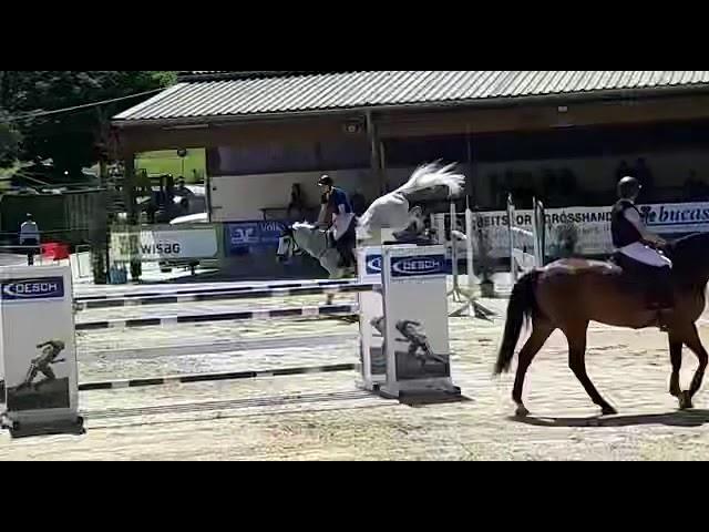 Gelding by Quidado X Coronado b.2007 3 Place 140