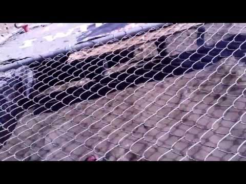 Tough Mudder - Cage Crawl and Trench Warfare - Live Nation/Ticketmaster Team