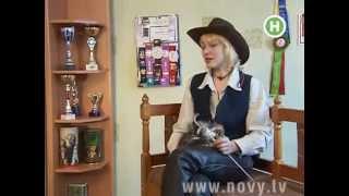 самые большие домашние кошки порода Мейн Кун, Bartalameo*UA,