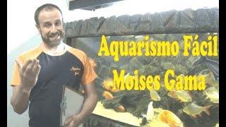 Canal Aquarismo Fácil - Moisés Gama