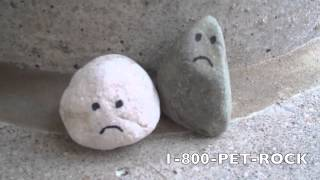 Save a Pet Rock