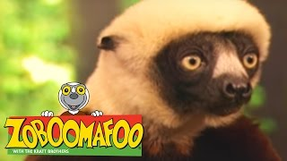 🐒 Zoboomafoo 🐒 120 | Animal Daycare - Full Episode | Kids TV Shows