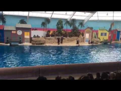 Dolphin show Brookfield zoo Chicago