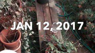 thursday, january 12th | a snap story