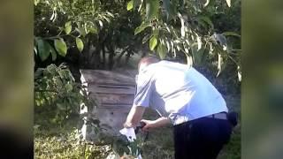 видео Как уничтожить пчел