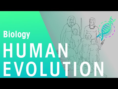 The Evolution of Humans | Biology for All | FuseSchool