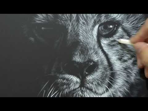 Cheetah drawing by wildlife artist Richard Symonds