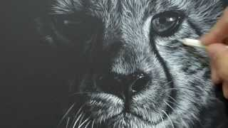 Cheetah Drawing Wildlife Artist Richard Symonds