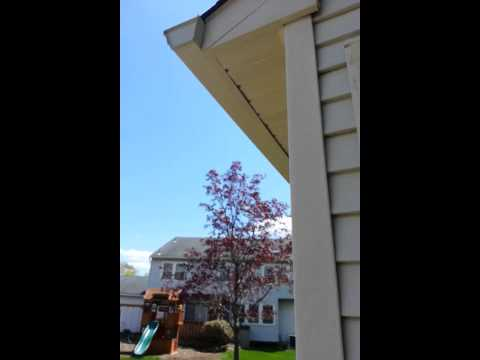 Carpenter Bee Yellow Jacket Wasp Removal and Repair Middlesex NJ   Bee Exclusion New Jersey