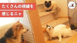 via Instagram@namifuwa https://www.instagram.com/namifuwa/ iOSアプ...