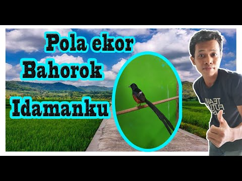 If This Tail Rumped Bahorok Youtube
