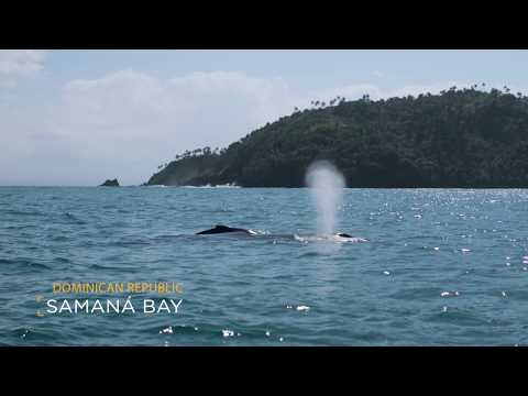 Whale Watching Season In Samaná | Go Dominican Republic