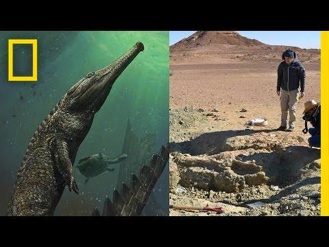 giant prehistoric crocodile discovered in tunisia