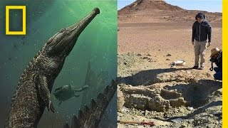 Giant Prehistoric Crocodile Discovered In Tunisia