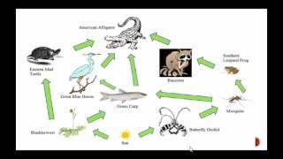 Food Chains vs Food Webs