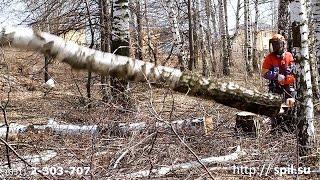 видео Спил деревьев в Нижнем Новгороде и области
