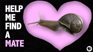 Help a Snail Find True Love!