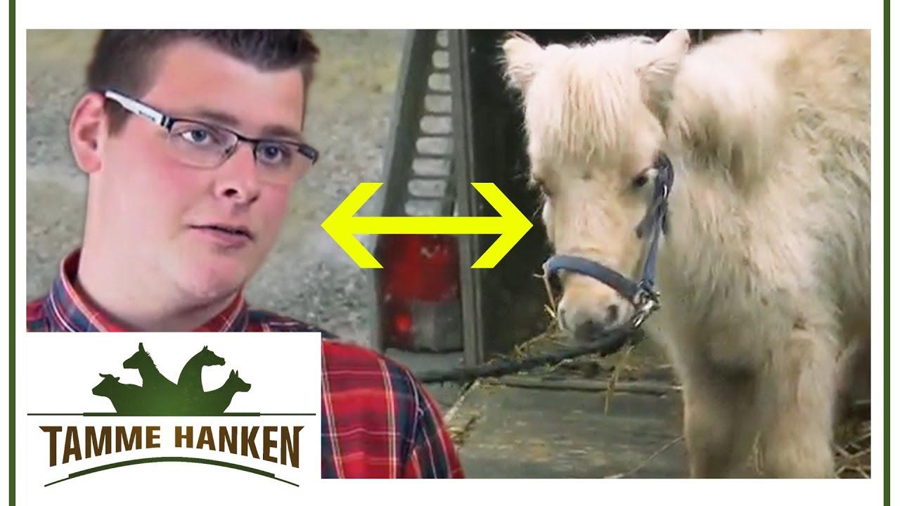 Nachfolger tamme hanken Tamme Hanken