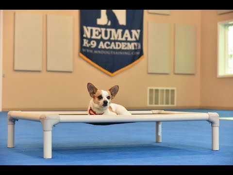 Catie (Chihuahua Mix) Boot Camp Dog Training Video Demonstration