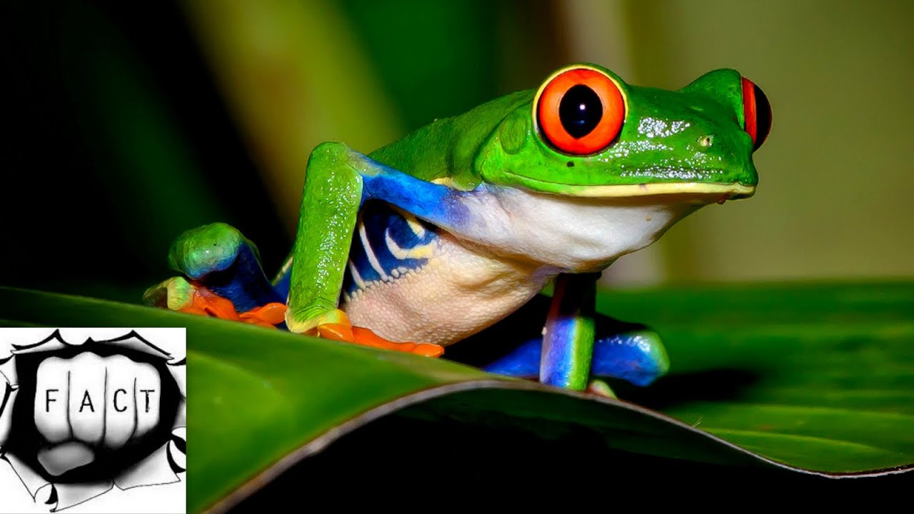 Permalink to Most Beautiful Tropical Animals