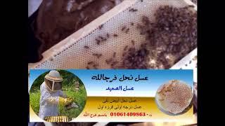 من هنا تبدا مشروع لانتاج عسل النحل خلايا نحل سلالات ملكات قويه للبيع Youtube