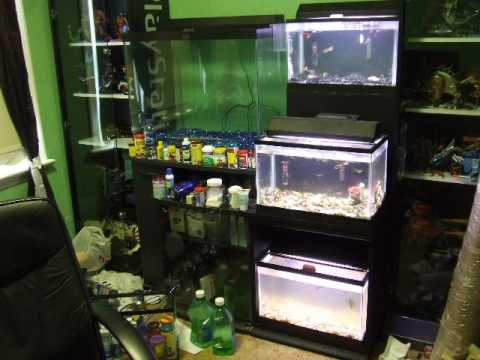 Woodworking tips magazine how to build an aquarium stand for Fish for a 10 gallon tank